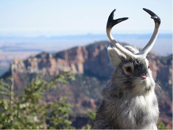 Part rabbit part antelope hybrid