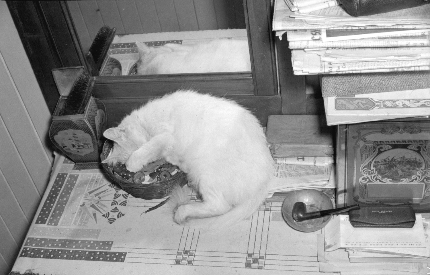 Cat on a desk, ca. 1940 Jack Lindsay, Photographer. Reference code AM1184-S3-: CVA 1184-1084