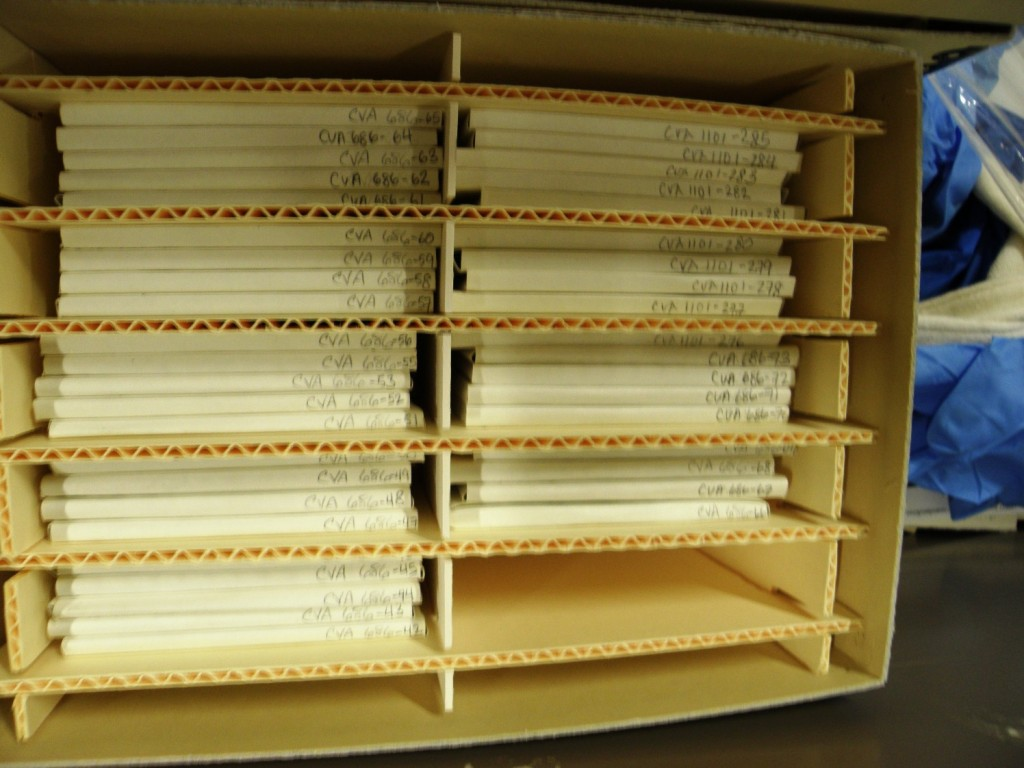 Glass negatives stored neatly in their special modified box. Photo by Cindy McLellan.