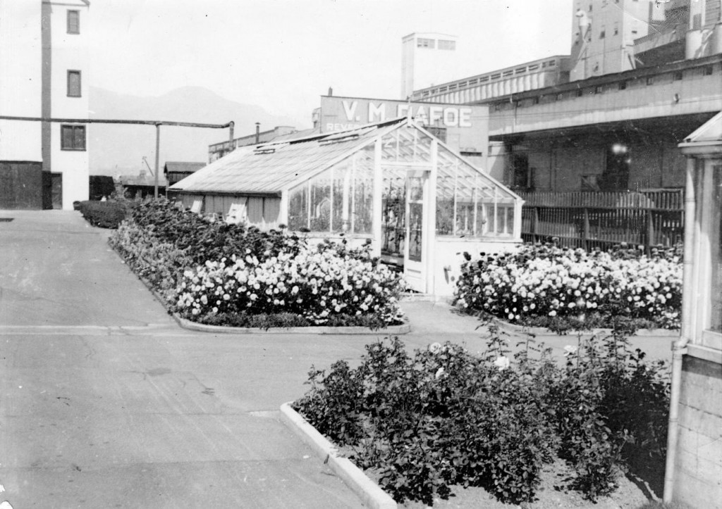 The old greenhouse at BC Sugar ca. 1930s. Reference code: 2011-092.3082.1.