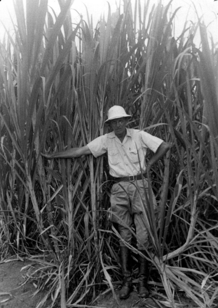 Dr. Frank Peto in a sugarcane field in the Dominican Republic at the BC Sugar-owned Ozama Sugar Refining Company, ca.1945. Reference code: 2011-092.4388