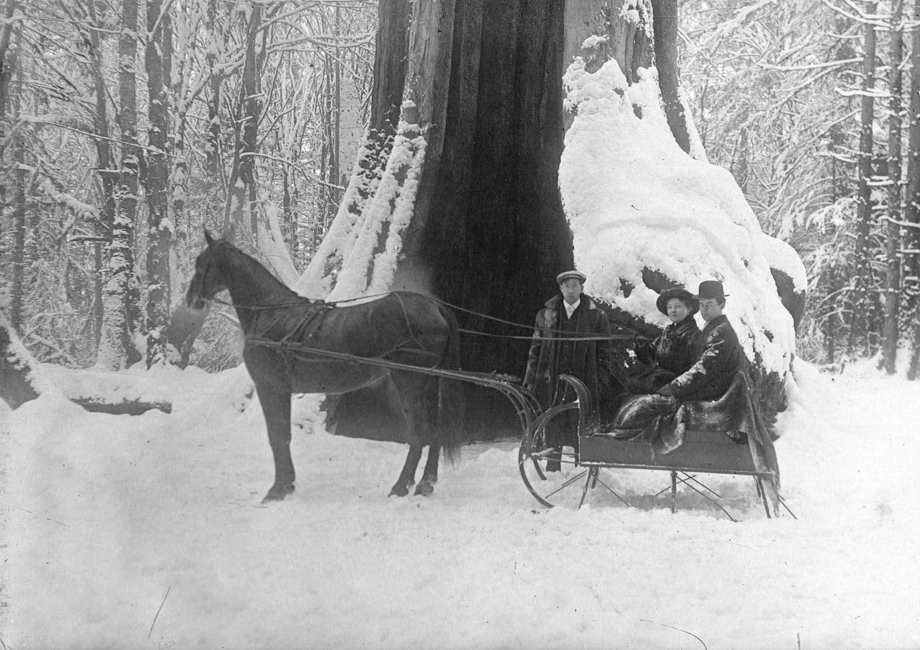 Horse and sleigh infront of hollow tree