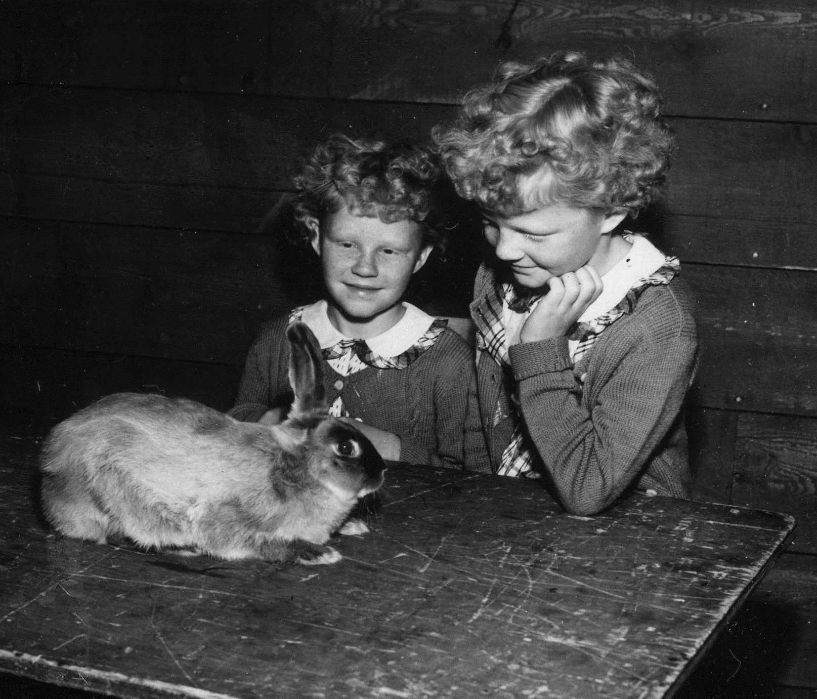 Two girls looking at rabbit on table, Pacific National Exhibition, 1952. Reference code AM281-S8-: CVA 180-1765.